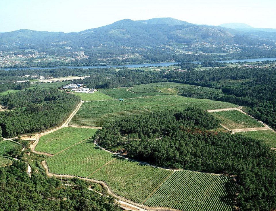 El viñedo, la cuna de Santiago Ruiz Vi  edo tomi  o sr aerea 960x733